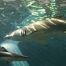 Sharks!!! by MaluMoraza