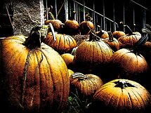 A Sure Sign of Fall by Debbie Robbins