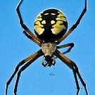 Banana Spider  by Sean McConnery