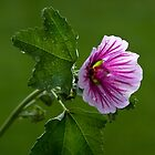 Feeling Mallow After the Rain by Adam Bykowski