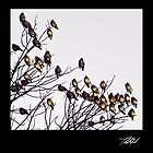Cedar Waxwings by Theodore Black