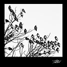 Cedar Waxwings b&w by Theodore Black