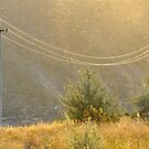 Golden Rain by Kasia Nowak