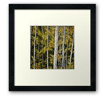 Yosemite Park Trees [013] Framed Print