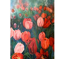 Pink Tulips [001] Photographic Print