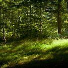 Soft Morning Light by Phillip M. Burrow