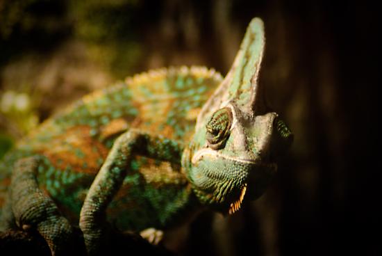Iguana by Arjuna Ravikumar
