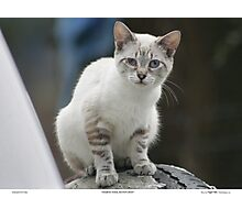 Rescue Kitten Fran Photographic Print
