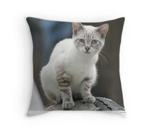 Rescue Kitten Fran Throw Pillow