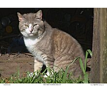 Tabby-Tux Feral Tomcat Photographic Print