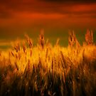 Winds of Harvest by Jamie  Palmer