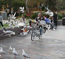 A man, a bike and a flock of seagulls by Bailey Designs