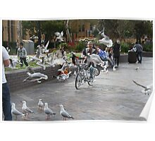 A man, a bike and a flock of seagulls Poster