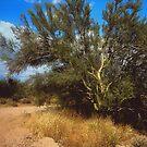 Desert Life by lroof