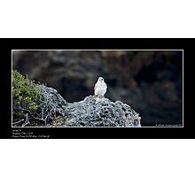 Cape Otway Photographic Print