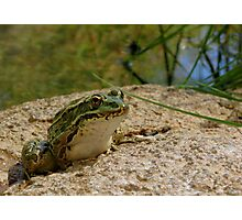 Chiricahua Leopard Frog Photographic Print