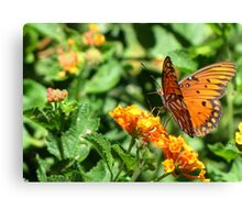 Butterfly ~ Gulf Fritillary Canvas Print