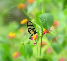 """ Giant Glasswing "" by Richard Couchman"