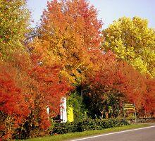 Autumnal Brightness by sstarlightss