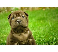 Baby Wrinkles Photographic Print