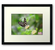 """ Zebra Longwing "" Framed Print"