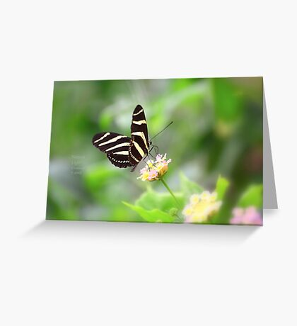 """ Zebra Longwing "" Greeting Card"