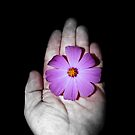 In this hand...there is beauty. by Paul Rees-Jones