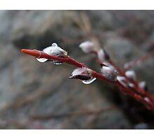 Raindrop Photographic Print