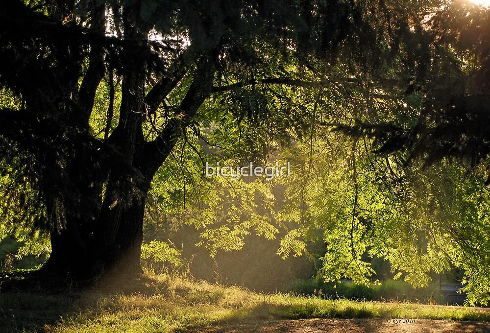 Golden Afternoon by bicyclegirl