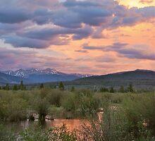 Wetlands by bberwyn