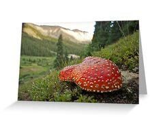 Mountain Mushrooms Greeting Card