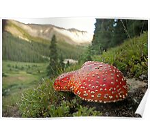 Mountain Mushrooms Poster