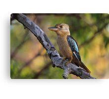 Kookaburra Sittin' In An Old Gum Tree Canvas Print