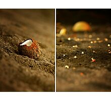 things found on a sandy beach  Photographic Print