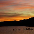 Silhouettes of cranes at sunset  by algill