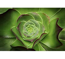 Green Aeonium Photographic Print