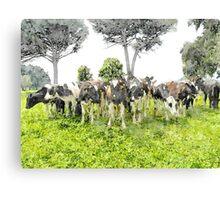 Cows Canvas Print