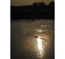 Salt Water Crocodile in South Aligator River,  Kakadu at Sunset Photographic Print
