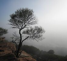 A misty morning at Z Bend Gorge, Western Australia by Pauline Andrews