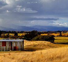 The Wairau Plains by Robyn Carter