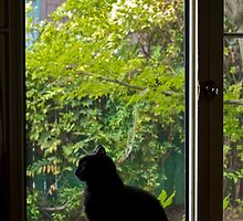 Cat by the Window by Edmond Leung