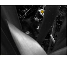 Lela in Black, White and YELLOW by kikuishka