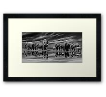 The Addo Elephants Framed Print