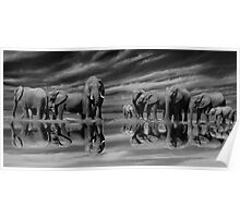 The Addo Elephants Poster