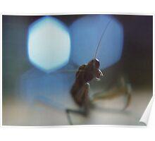 Prayer for the Mantis Poster