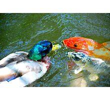 The Koi Fish Kisser  Photographic Print