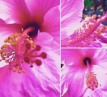 Pink Hibiscus  by Madalena Lobao-Tello