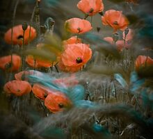 The Poppy field by Magdalena   Wasiczek