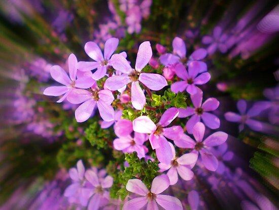 Dainty little Flower - Spring 2010 by EdsMum