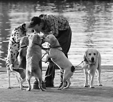 The Dogwalker by PeterDamo